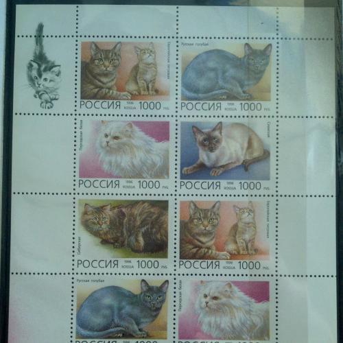 Марка Россия 1996 Домашние кошки