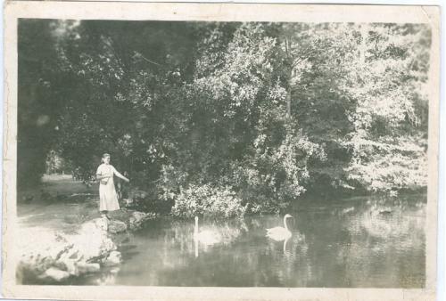 Аскания-Нова Пруд в ботаническом парке 1936 год Днепропетровская область Фото Открытка СССР Украина