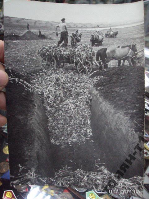 фотография с.лесоводы передовик производства