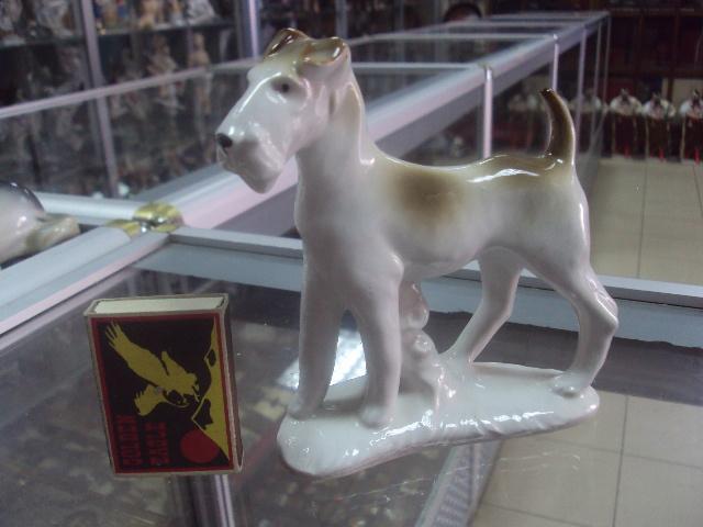 германия собака собачка терьер фокстерьер