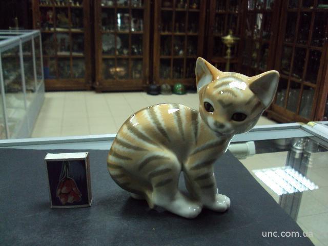 лфз кот котик