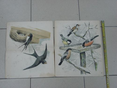литографии германия птицы лот 2 шт №8053