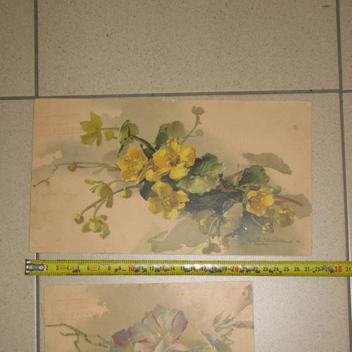 литографии картина цветы гермния лот 2 шт №8058