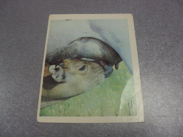 открытка аскания нова орлова №289