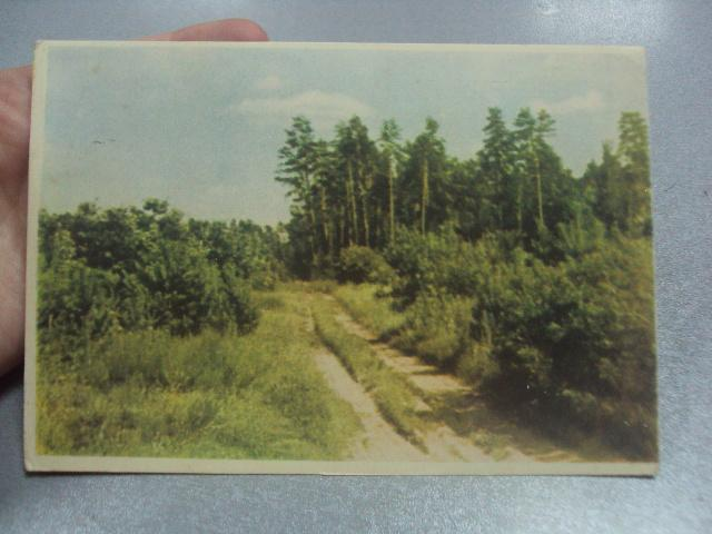 открытка бахмутова в лесу  №543
