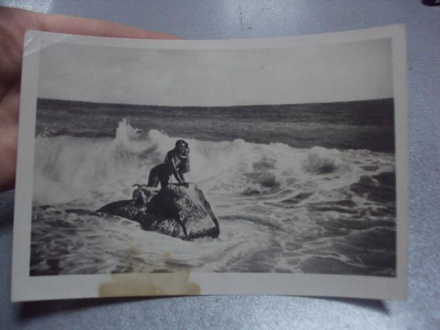 открытка крым мисхор №838