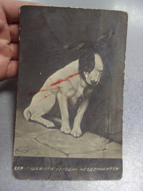 открытка сегодня не здоровится, винница 1911 №1390