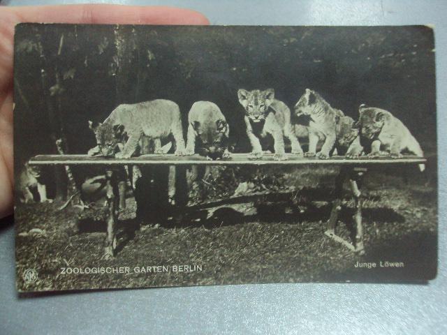 открытка зоологический парк берлин №1421