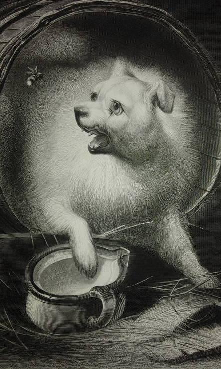 1850 Старинная гравюра Der Störenfried .А.Пейн. Германия Оригинал