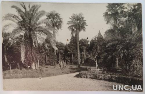 Фото Сухум Ботанический сад 1931 год