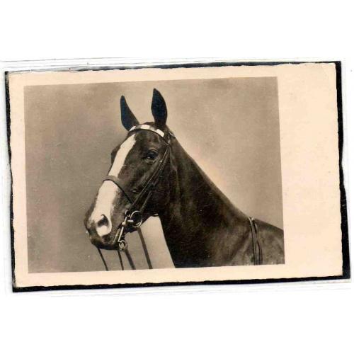 Старинные открытки с лошадьми 9