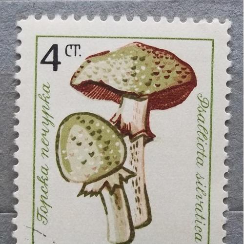 Болгария 1961 г -  Шампиньон лесной