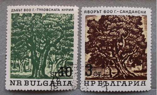 Болгария 1964 г - Старые деревья