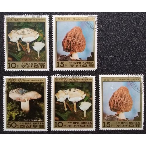 Северная Корея 1986 г - грибы, 5 шт