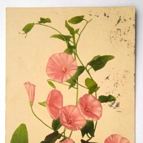 Поштова карточка листівка открытка Берізка 1913 рік France Yu32