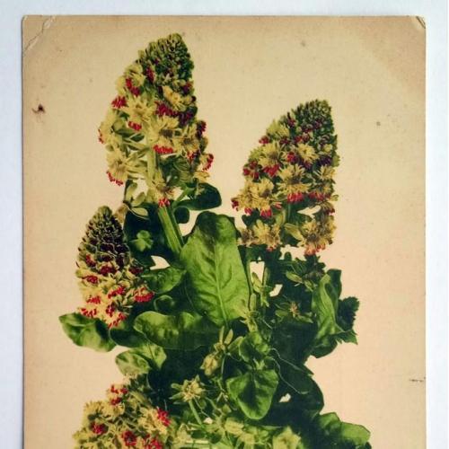 Поштова карточка листівка открытка Букет поч. ХХ ст. France Yu42