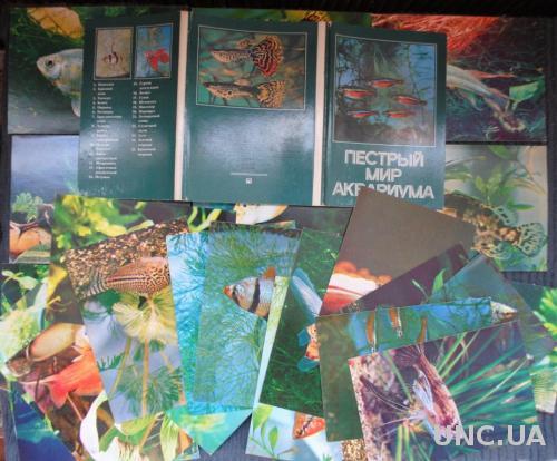 Открытки с фото и рекомендациями по содержанию и разведению рыб. Листівки акваріум риба.