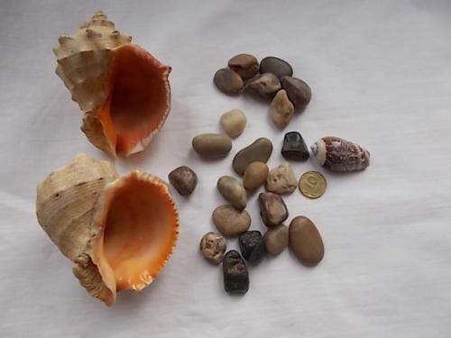 Дары Чёрного моря ракушки и камушки, набор для аквариума, интерьера