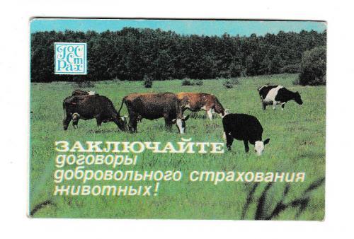 Календарик 1984 Госстрах, коровы