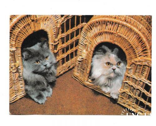 Календарик 1992 Кошки