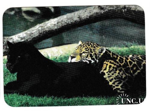 Календарик 1997 Фауна, гепард, ягуар