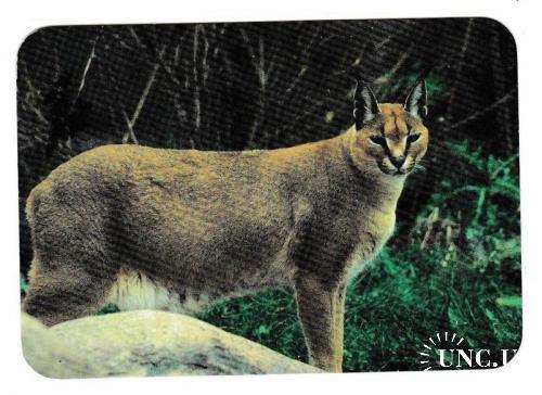 Календарик 1997 Фауна, Рысь