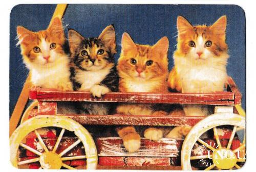 Календарик 1999 Кошки