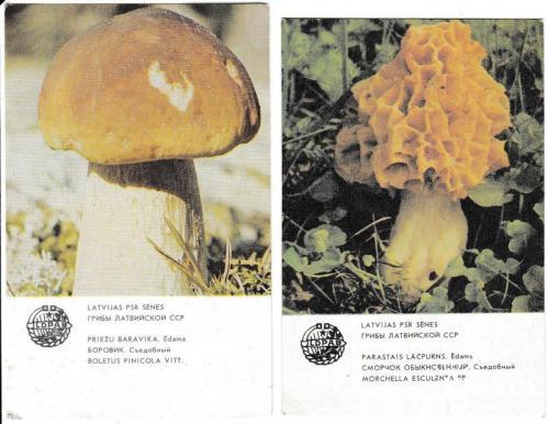 Календарики 1986 Грибы, Латвия