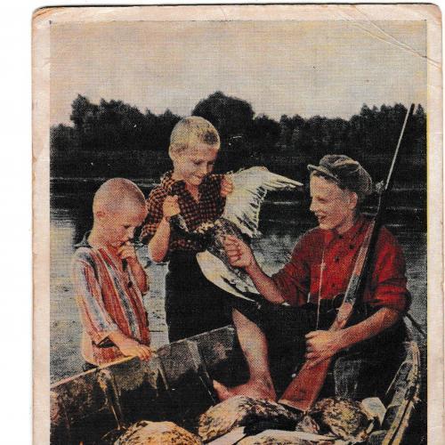 Открытка 1956 После охоты, ИЗОГИЗ