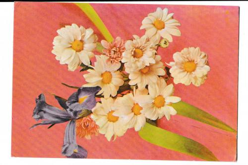Открытка 1969 Цветы