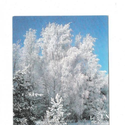 Открытка 1990 С Новым Годом!, зима, лес, природа