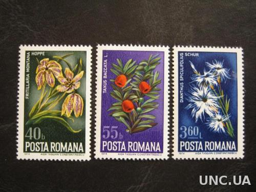 флора цветы румыния т