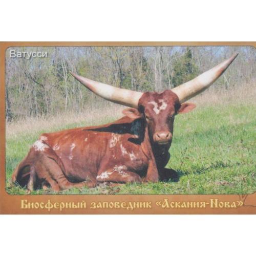 """магнит сувенирный Заповедник Аскания-Нова""""-13"""