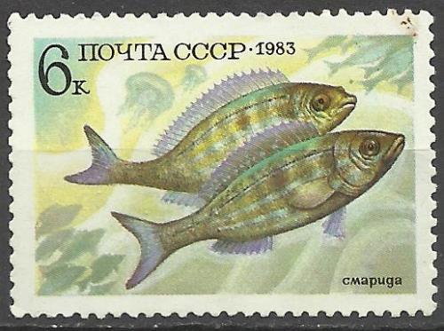 марки СССР 1983 Рыба