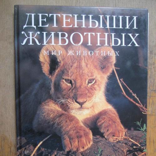 Детеныши животных. Мир животных