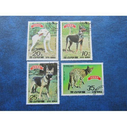 4 марки северная Корея 1989 фауна собаки сервал гаш
