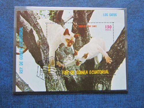 Блок Экваториальная Гвинея фауна коты кошки сиамские гаш