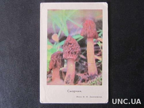 календарик 1978 грибы сморчки