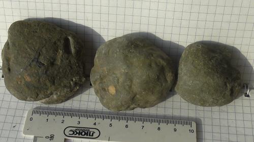 Окаменелые остатки моллюсков 19ш (разные)
