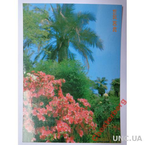 """Открытка """"Сухуми. Ботанический сад"""" (1980) чистая"""