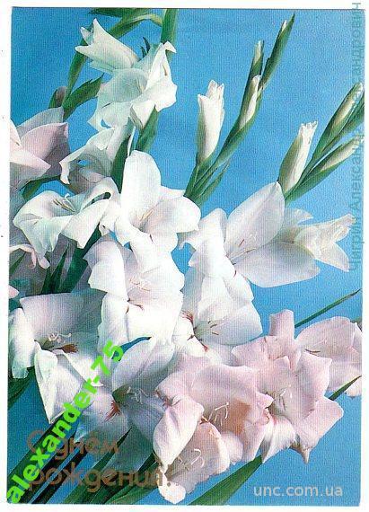 C днем рождения.Белые красивые гладиолусы.