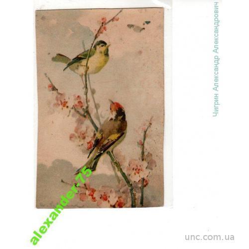 Кляйн.Птички.Цветущее дерево.