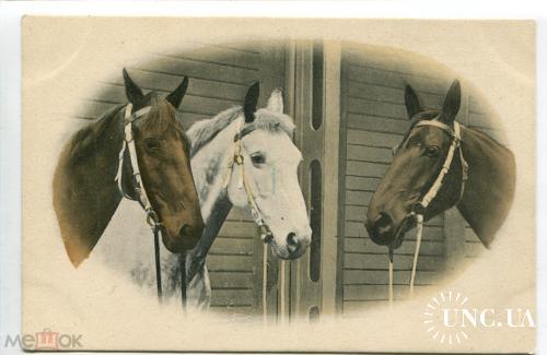 Кони. Лошадь. Три узды.