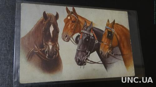 Кони. Лошади. Печать. Армии.