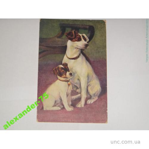 Собака и щенок.Мать и дитя.