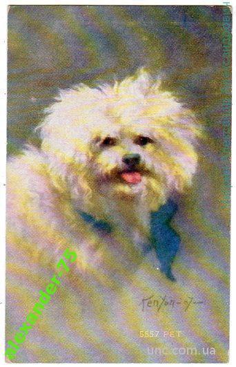 Собака.Симпатичный белый песик.