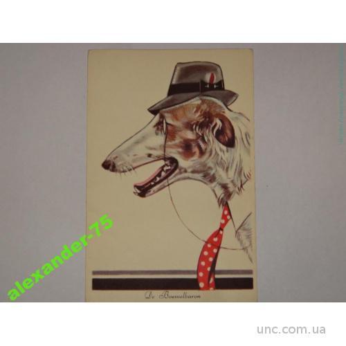 Собака.Собаки.Колли.В шляпе и галстуке.