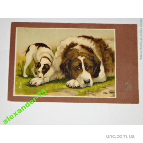 Собака.Собаки.Ньюфаундленд и щенок.