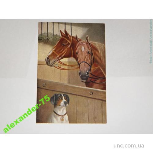 Собака.Собаки.Такса и лошади.