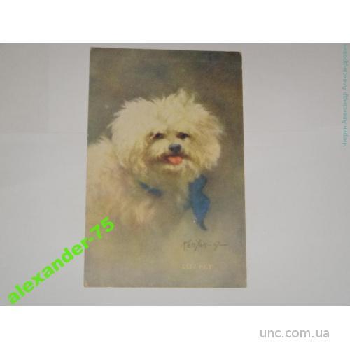 Собака.Живописный портрет.Болонка.